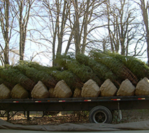 Trees Being Delivered